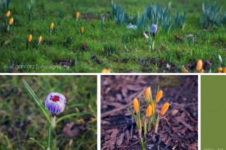 nature photography manchester, cheshire, lancashire